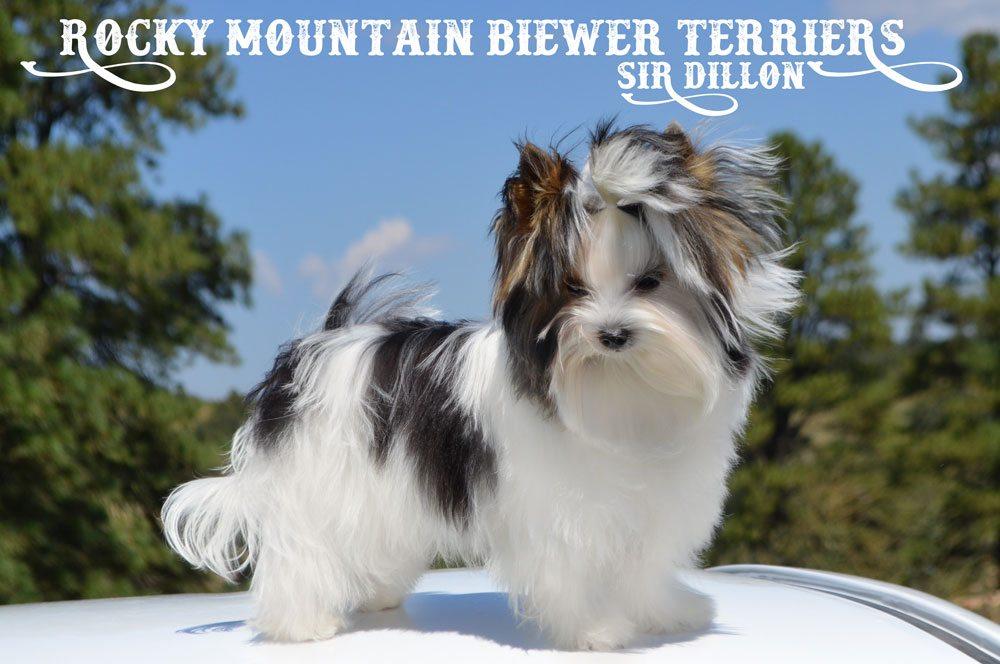 Rocky Mountain's Sir Dillon