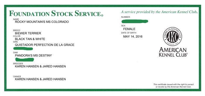 Biewer Terrier AKC FSS Registration Certificate