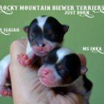 Rocky Mountain's I-Litter just born