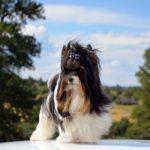 Rocky Mountain's Sir Bobby