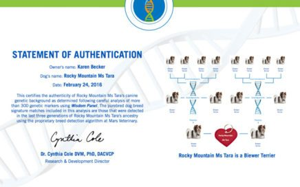 Pure Bred Biewer Terrier Mars Wisdom Panel DNA Test Result