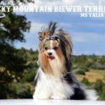 Rocky Mountain's Miss Talia