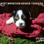 Rocky Mountain's Sir Hunter