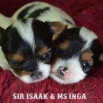 Rocky Mountain's Sir Isaak