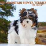 Ms Faith Biewer Terrier Girl