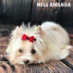 Miss Amanda GoldDust Girl