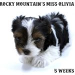 Rocky Mountain's Miss Oliana
