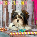 Rocky Mountain's Miss Ulyana