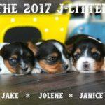 2017 J-Litter Rocky Mountain Biewer Terriers