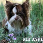 Sir Aspen