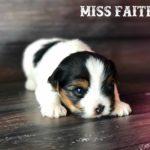Miss Faith 2017 F-Litter