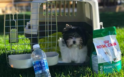 Biewer Terrier Puppy Shipping Crate