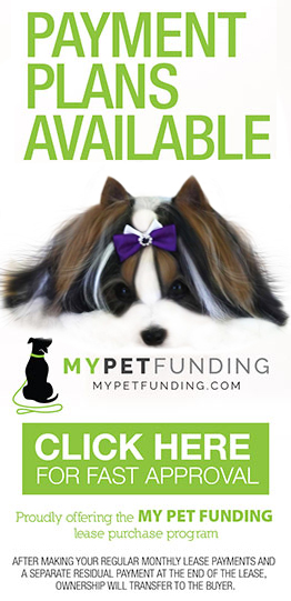 Biewer Terrier Financing