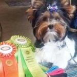 Rocky Mountain's Sir Casper won BOB