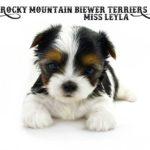 Rocky Mountain's Miss Leyla