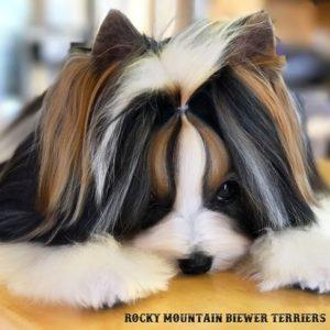 Knotless Hair Wraps