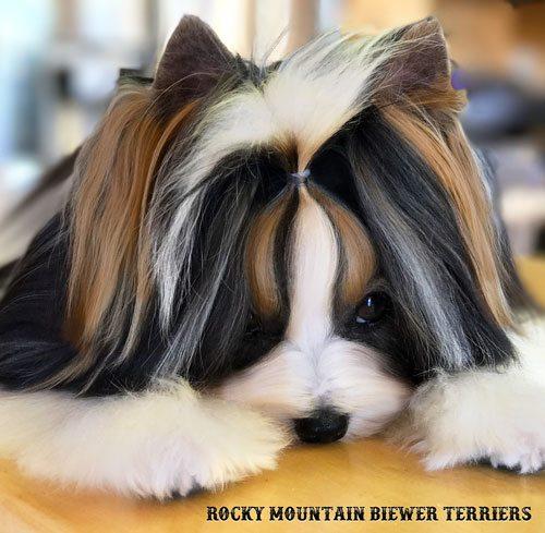 Knotless Hair Wrap