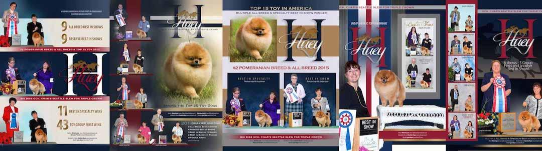 The Biewer Terrier Club Of America Denied Lynn Meyers Membership