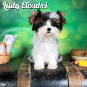 Elizabet Mini Biewer Girl