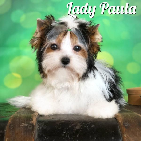 Paola Biewer Terrier