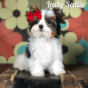 Sallie Biewer Puppy