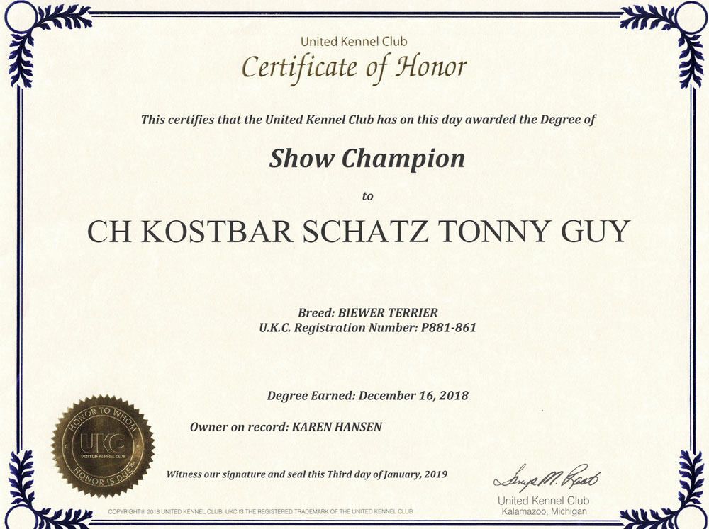 CH Kostbar Schatz Tony Guy