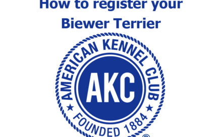 How to register your Biewer Terrier with AKC
