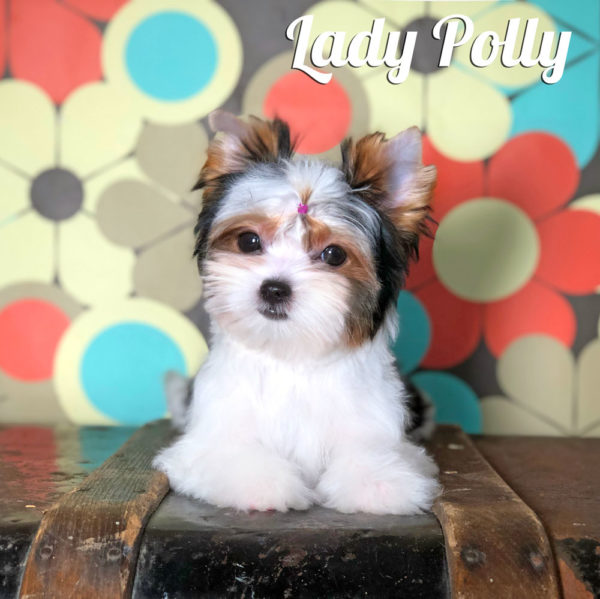 Polly Biewer Puppy