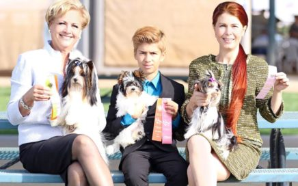 Biewer Terriers a the Grand Valley Kennel Club