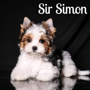 Simon Biewer Puppy
