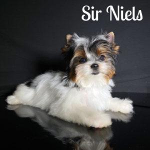 Niels Biewer Puppy