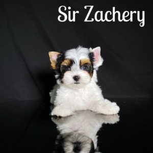 Zachery Biewer Puppy