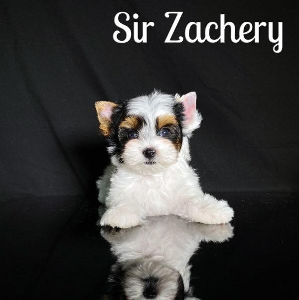 Zachery Biewer Puppy