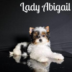 Abigail Biewer Puppy