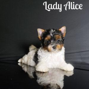 Alice Biewer Puppy
