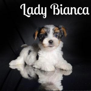 Bianca Biewer Puppy