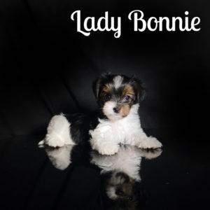 Bonnie Biewer Puppy