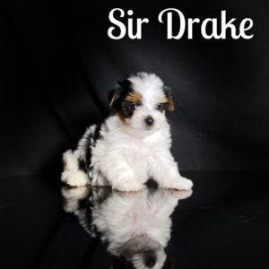 Drake Biewer Puppy