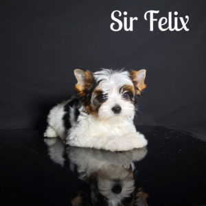 Felix Biewer Puppy