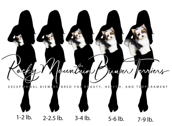 Biewer Terrier Size Chart