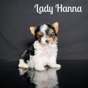 Hanna Biewer Puppy