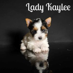 Kaylee Biewer Puppy