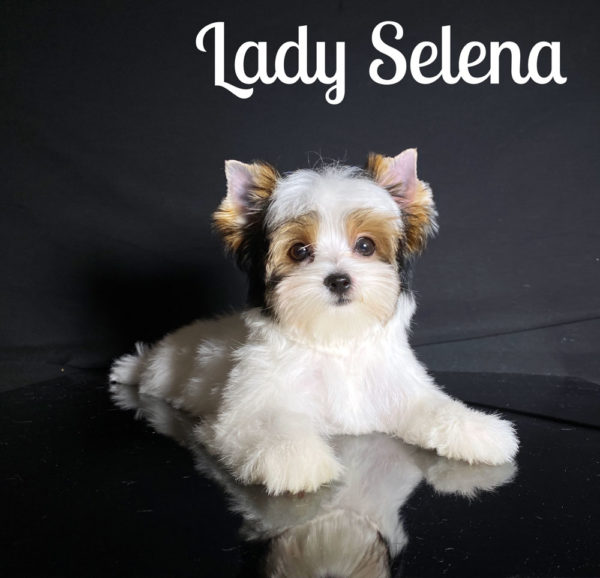 Selena Biewer Puppy