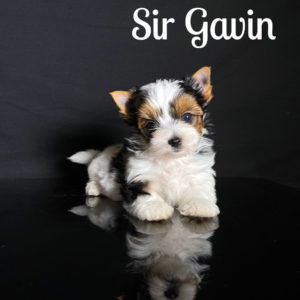Gavin Biewer Puppy