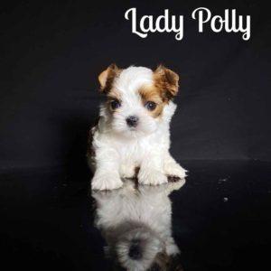 Russian Salon Dog Puppy