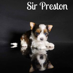 Preston RSD Puppy