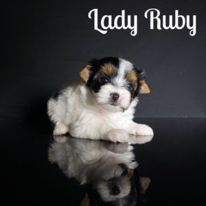 Ruby Biewer Puppy
