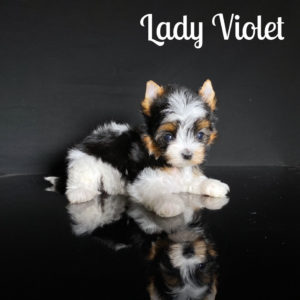Violet Biewer Puppy