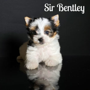 Bentley Biewer