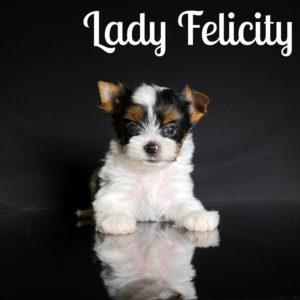 Felicity Biewer